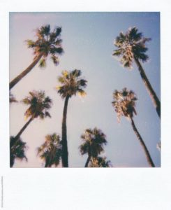 Photo Instax palmiers